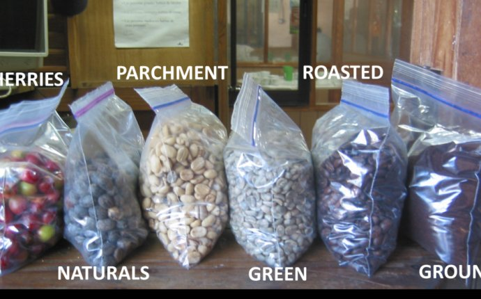 The Stages of a Coffee Bean - Mayorga Organics