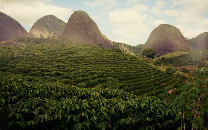 Coffee Plantations in Brazil