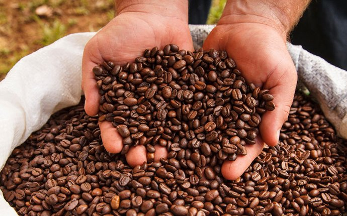 Costa Rica Coffee Plantations Tour